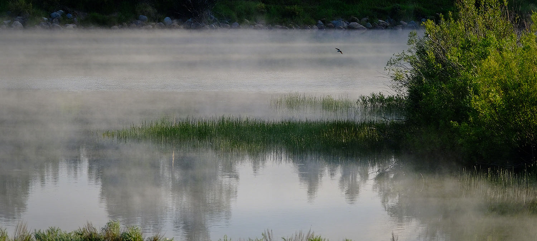 LakeFogBird