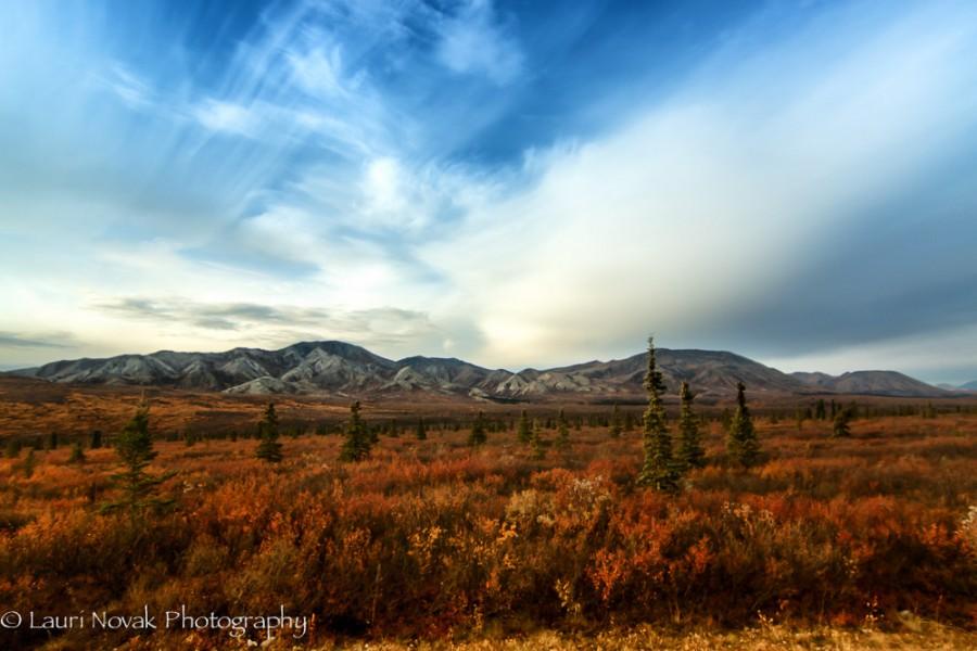 Denali National Park Range & Sky