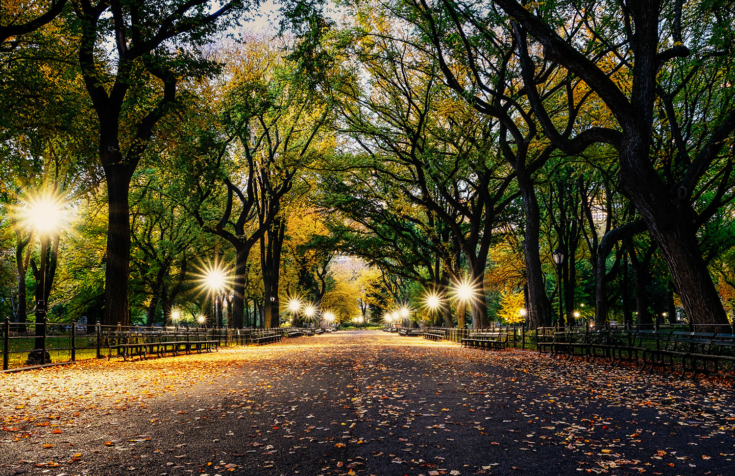 The Mall in Central Park before Sunrise.